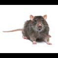 上海有那些灭鼠公司|聚青臣4008780863