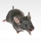 上海灭鼠公司教你怎么消灭家里的老鼠