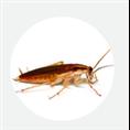 上海灭蟑螂公司