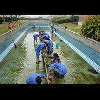 水池清洗养护